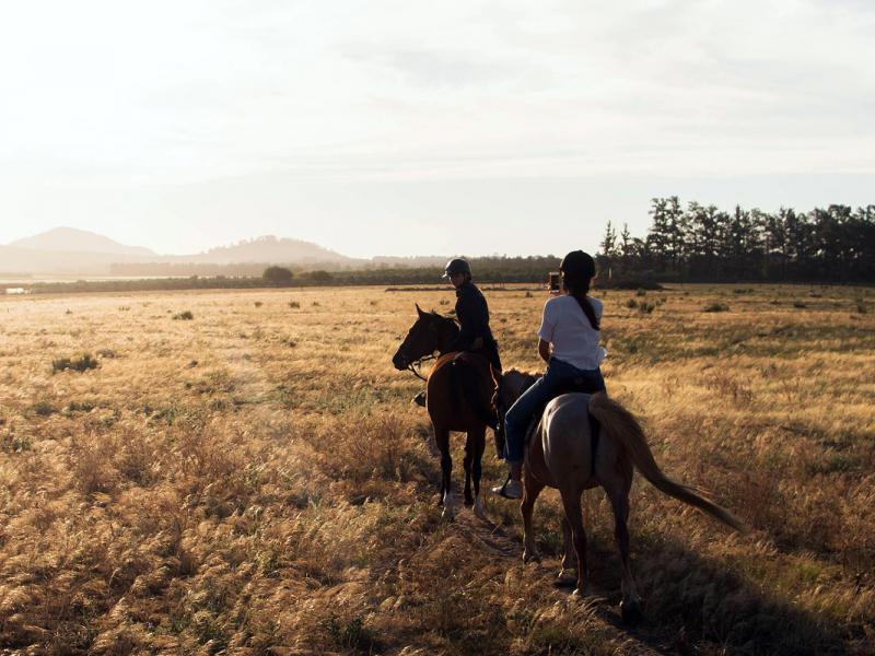 Izjādes ar zirgiem - lieliska dāvana kāzās vai kāzu jubilejā